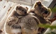 Australia destina millones de dólares para recuperarse tras incendios forestales