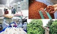 Exportación agro-silvícola y acuícola supera 22 mil millones de dólares en lo que va del año