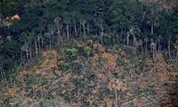 Brasil pide más inversión internacional para prevenir la deforestación del Amazonas