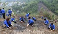 Vietnam plantará mil millones de árboles en el periodo 2021-2025  