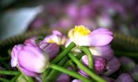 การกรุ่นกลิ่น 'ชาดอกบัว' โห่เตย-ภูมิปัญญาอันล้ำเลิศของชาวฮานอย