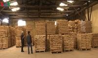 การส่งออกผลิตภัณฑ์จากป่าไม้ของเวียดนามจะบรรลุ 2 หมื่นล้านดอลลาร์สหรัฐภายในปี 2025
