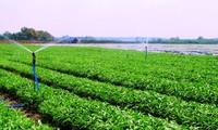 เกษตรกรฮานอยเชื่อมโยงการจำหน่ายสินค้าการเกษตรในช่วงเกิดการแพร่ระบาดของโรคโควิด-19