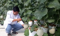 สินค้าเกษตรของจังหวัดบิ่งถ่วนหาทางเจาะตลาดใหญ่ๆ