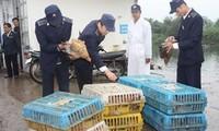 Vietnam tightens precautions against A/H7N9