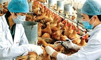 Fight against bird flu intensified