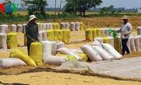 Vietnam wins bid to supply 200,000 tons of rice to Philippines