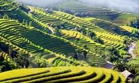 Forbes names northern Vietnam as world top budget travel destination