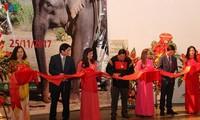 Exhibition spotlights Central Highlands elephants