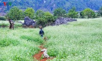 A visit to Ang village and Doi cave in Moc Chau, Son La