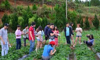 Agro-tourism makes Lam Dong province special