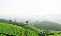 Follow Hanoi Paragliding Club to fly over Long Coc tea hills