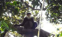 Biodiversity treasure discovered in Kon Tum