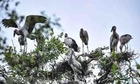 Tram Chim National Park - a Ramsar site