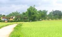 Einigkeiten in Neugestaltung ländlicher Gebiete in Binh Dinh