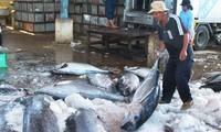 Seminar über die Regulierung des Thunfischfangs in Vietnam