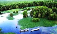 Nationalpark Ca Mau ist als Welt-Ramsar-Gebiet anerkannt