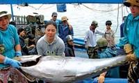 Forum über die Verarbeitung von Thunfisch