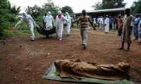 Das Ebola-Virus kostet das Leben von mehr als 1200 Menschen in Afrika