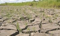 Bewohner im Mekong-Delta ergreifen Maßnahmen zur Anpassung an den Klimawandel