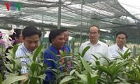 Dong Thap soll typische Reis- und Blumensorten der Provinz produzieren