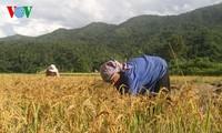 Vietnam appelliert an Partner für weitere Unterstützung bei der Armutsbekämpfung