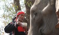 Die Elefantenverehrungszeremonien der M'nong im Dorf Don