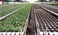 Entwicklung der Hightech-Landwirtschaft – Probleme und Lösungen