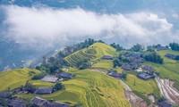 Reisterrassenfelder in Hoang Su Phi, Meisterwerk der ethnischen Minderheiten
