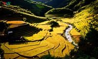 Dokument zur Anerkennung der Reisterrassen in Mu Cang Chai als besondere Nationalstätte