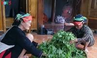 Gemeinde Cao Bo fördert Anpflanzen von Shan Tuyet-Tee