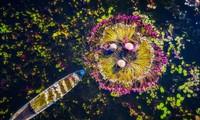 Foto des britischen Fotografen über mobile Verkaufsstände von lebenden Zierfischen in Vietnam gewann Grand Prize in USA