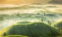 Foto über Teehügel Phu Tho gehört zu Top-Fotos über das schönste Wetter des Jahres