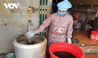 Platostoma palustre trägt zur Armutsminderung in der Provinz Cao Bang bei