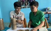 Die Volksgruppe der Bahnar in Gia Lai produziert Kaffee nach Exportstandards