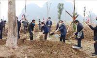 Viele Provinzen landesweit starten Baumpflanzenfeste