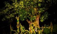 VTV True Concert - Die ewigen Töne aus der Natur