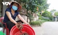 Wiederbelebung der versalzenen Wälder in Dong Rui