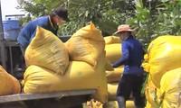 Provinz An Giang unterstützt Bauern beim Reiskonsum