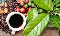 2019 Buon Ma Thuot Coffee Festival draws huge crowds