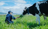 Vietnamese dairy industry targets 1 billion litres in 2020