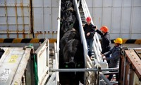 China suspends Australian beef imports from four abattoirs