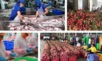 Vietnam's trade surplus amounts to 10 billion USD by mid-August
