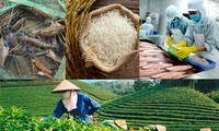 Vietnam to meet 2020 target of 40 billion USD from agricultural export