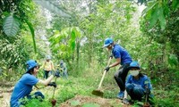 Vietnam to plant 1 billion new trees to cope with climate change, natural disasters