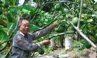 นาย Ba Liêm สมาชิกพรรคผู้สร้างสรรค์ในการมีแนวทางการผลิตใหม่