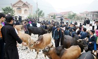 Cow market in Meo Vac