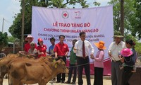 Cow bank project reviewed after 5 years