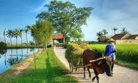 今后5年越南农村居民收入比2015年至少增加1.8倍