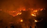 智利遭受史上最大森林火灾